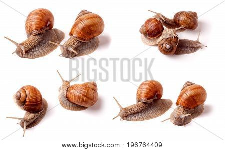 two live snail crawling on a white background close-up macro. Set or collection.