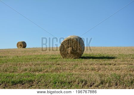 Straw bales on harvested field with  a hay bales  in horizon  and blue sky