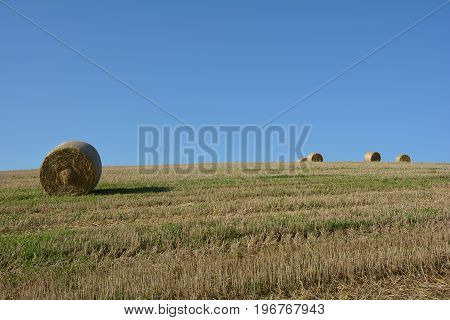 Straw bales on harvested field with  many hay bales  in horizon  and many blue sky