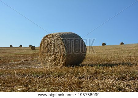 Some hay  bales lie in a landscape