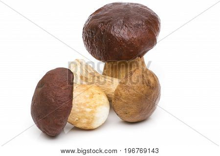 Porcini Mushroom with Rosemary Porcini Mushroom with Rosemary isolated on white background