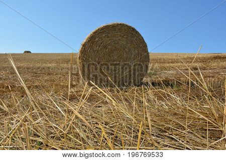 View from the ground on a straw bales with straws and sky