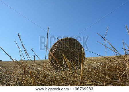 View from the ground on a straw bales with straws and many blue sky