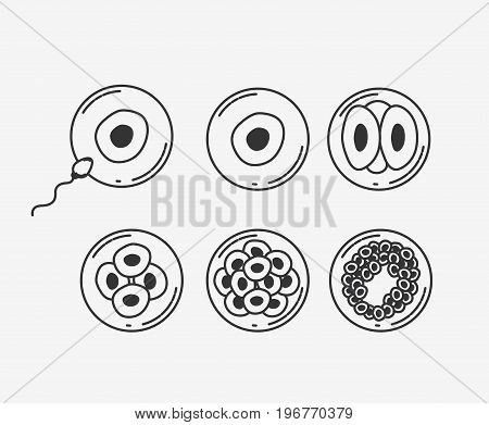 white background silhouette fecundation process vector illustration