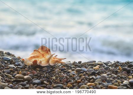 Shell of mollusk lies on pebble beach on the background of the sea