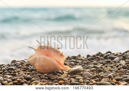 Seashell was thrown out by sea wave on pebble beach