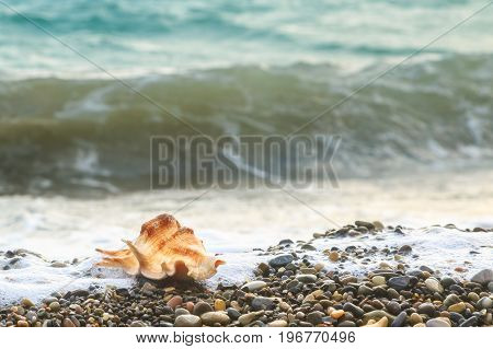 Seashell lies on pebble beach on the background of the wave