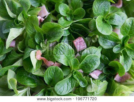 Lamb's lettuce and bacon salad - Valerianella locusta known as corn salad mache fetticus feldsalat nusslisalat nut lettuce rapunzel.