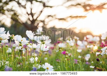 Blurred Nature Background With Summer Flowers In Garden