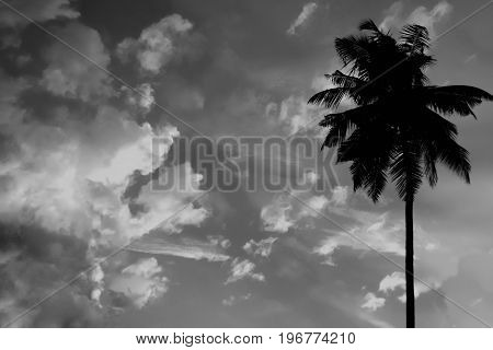 White abd black sunset in the tropics with silhouette of palm in the sky with clouds. Abstract sky