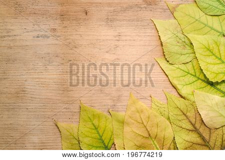 Autumn concept - frame of yellow leaves on a wooden board