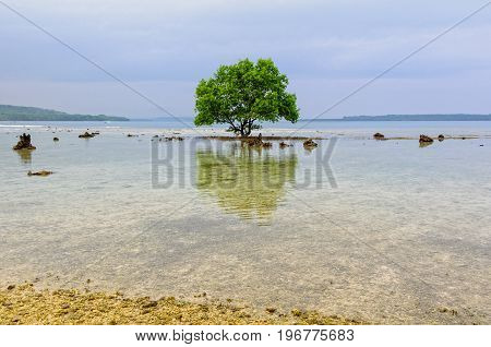 A single tree reflected in the shallow water clings to a coral rock reef - Espiritu Santo, Vanuatu