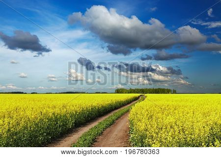 Landscape with blossoming field and road