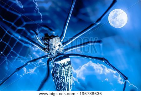 Halloween background. Macro of spider on spiderweb and beautiful night sky with full moon. Outdoor at nighttime.