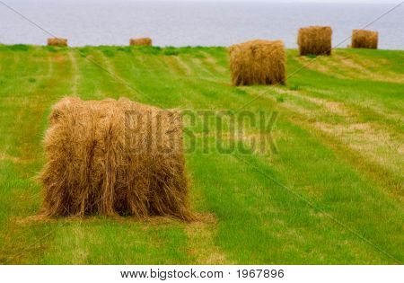Hay And Water