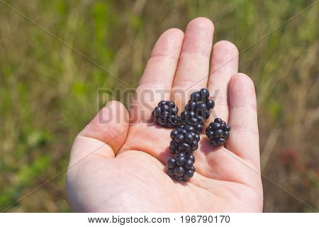 Blackberry On Human Hands Day Light Composition Photography