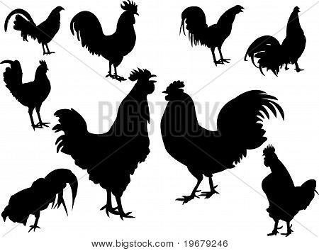 roosters collection