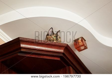 Cat lying on the top of cupboard and watching