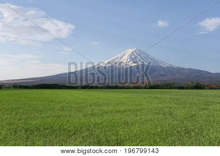 Rice in the rice farming area and have Mount Fuji in the daytimeconcept of tourism and landscape.