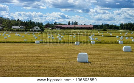 Landscape with hay bales in  plastic wrap on summer field