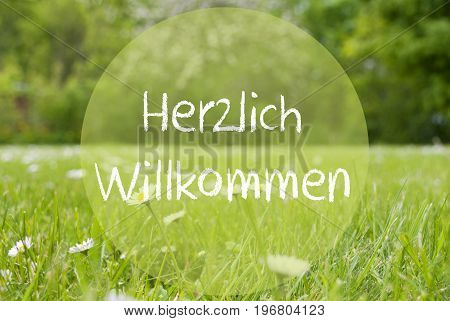 German Text Herzlich Willkommen Means Welcome. Spring Or Summer Gras Meadow With Daisy Flowers. Blurry Trees As Background.
