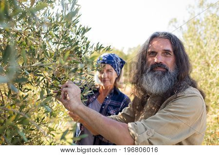 Portrait of confident couple harvesting olives in farm