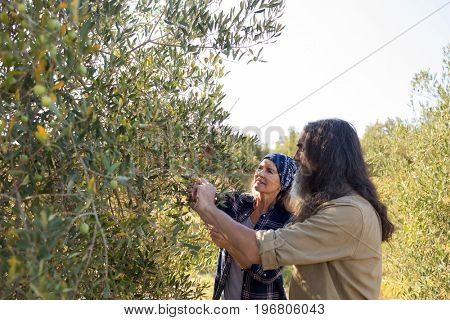 Couple interacting while harvesting olives in farm