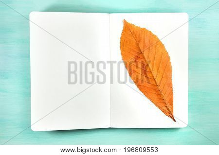 An overhead photo of a herbarium, a spiral notebook with a taped autumn chestnut leaf, on a teal background, with a place for text