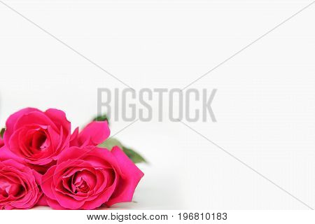 Bright Pink Long Stem Roses frame the corner of a plain white background to be used as a greeting card or stationary paper.
