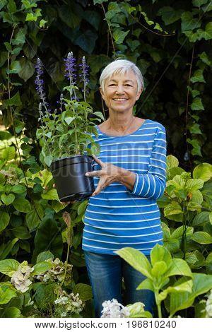 Portrait of smiling senior woman holding purple flower pot amidst plants at garden