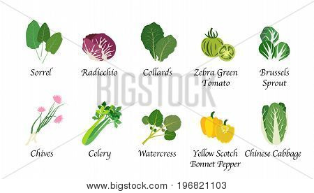 Organic Nature Health Vegetable Food Spice Isolated Vector Collection Set