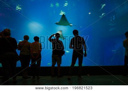 People admiring floating fishes in the Oceanarium in Wroclaw Poland.