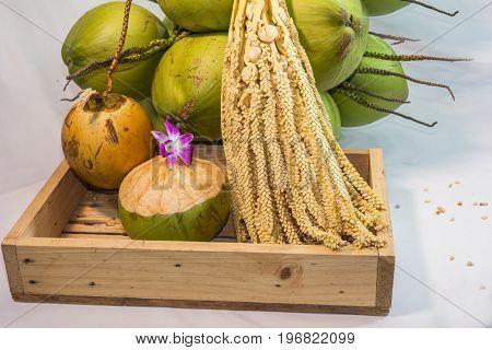 Still Life Flesh Coconut Fruit