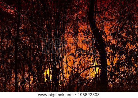 forest fire, Wildfire burning silhouette tree with red orange color flame at night for background.