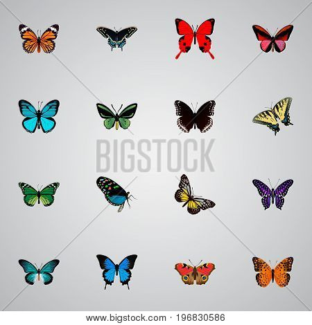 Realistic Polyommatus Icarus, Common Blue, Spicebush And Other Vector Elements