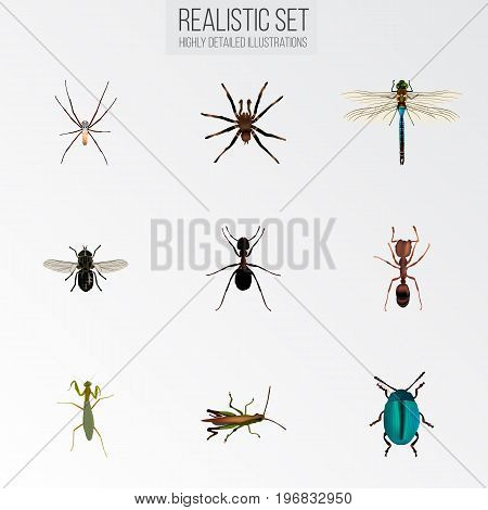 Realistic Midge, Spider, Locust And Other Vector Elements
