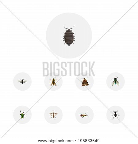Realistic Wasp, Butterfly, Insect And Other Vector Elements