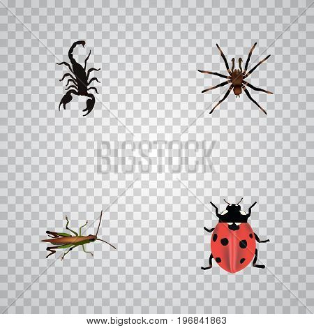 Realistic Arachnid, Poisonous, Locust And Other Vector Elements