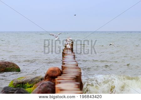 a flock of seagulls on the breakwater in the Baltic sea