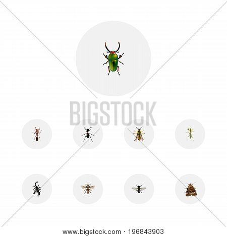 Realistic Wasp, Ant, Bee And Other Vector Elements