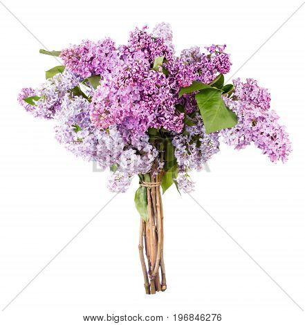 Beautiful Bunch of Lilac isolated on white background