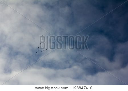 Silhouettes of a wedge of flying South wild geese in the shape of an arrow