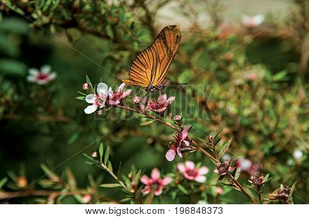 Close-up of a colorful butterfly on top of flowers in Horto Florestal, near Campos de Jordão, a town famous for its mountain and hiking tourism. Located in the São Paulo State, southwestern Brazil
