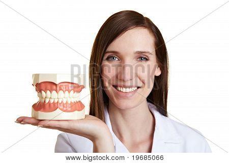 Happy Dentist With Teeth Model