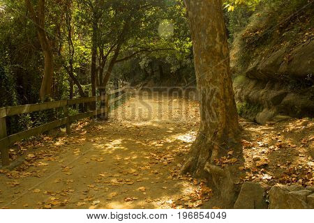 Path in a forest or park in autumn
