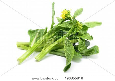 Bunch Of Floral Choy Sum Green Vegetable