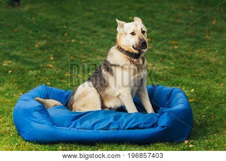 dog sitting on his bed, green grass background