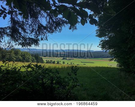 Green Tree Forest Background, Beautiful Bird Eye View On Fresh Pines In The Morning Sun Light, Europ
