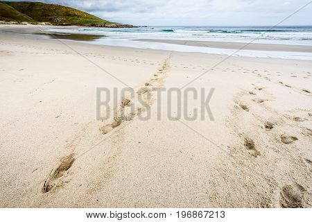 Footsteps Tracks In Sand On Beach Leading To The Sea.