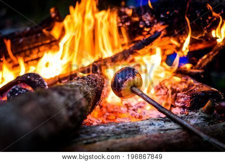 Making and cooking grilled apple over open camp fire. Grilling food over flames of bonfire on wooden branch - stick spears in nature at night. Scouts way of preparing food.